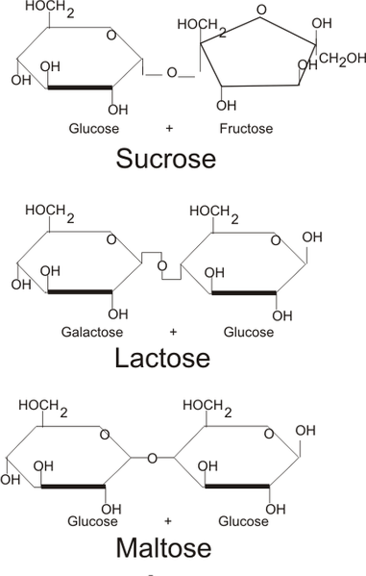 Disaccharide Structure