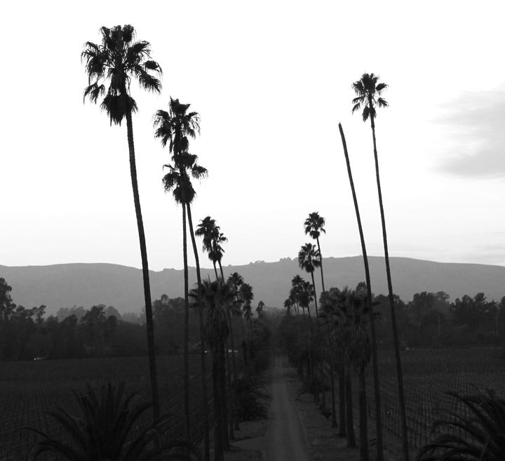 SCRIBE Winery sarahkayhoffman.com palm trees california