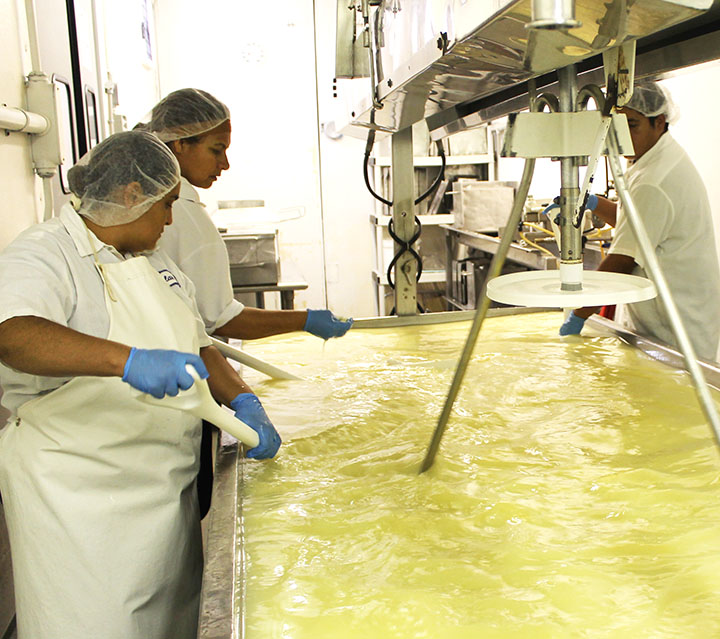 Raw Dairy Information sarahkayhoffman.com Cheese Stirring