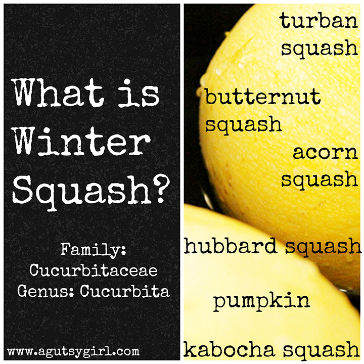 What is Winter Squash and why is it hurting my gut? #ibs #ibd www.agutsygirl.com