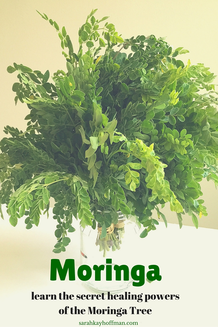 Learn the Secret healing powers of the Moringa Tree sarahkayhoffman.com