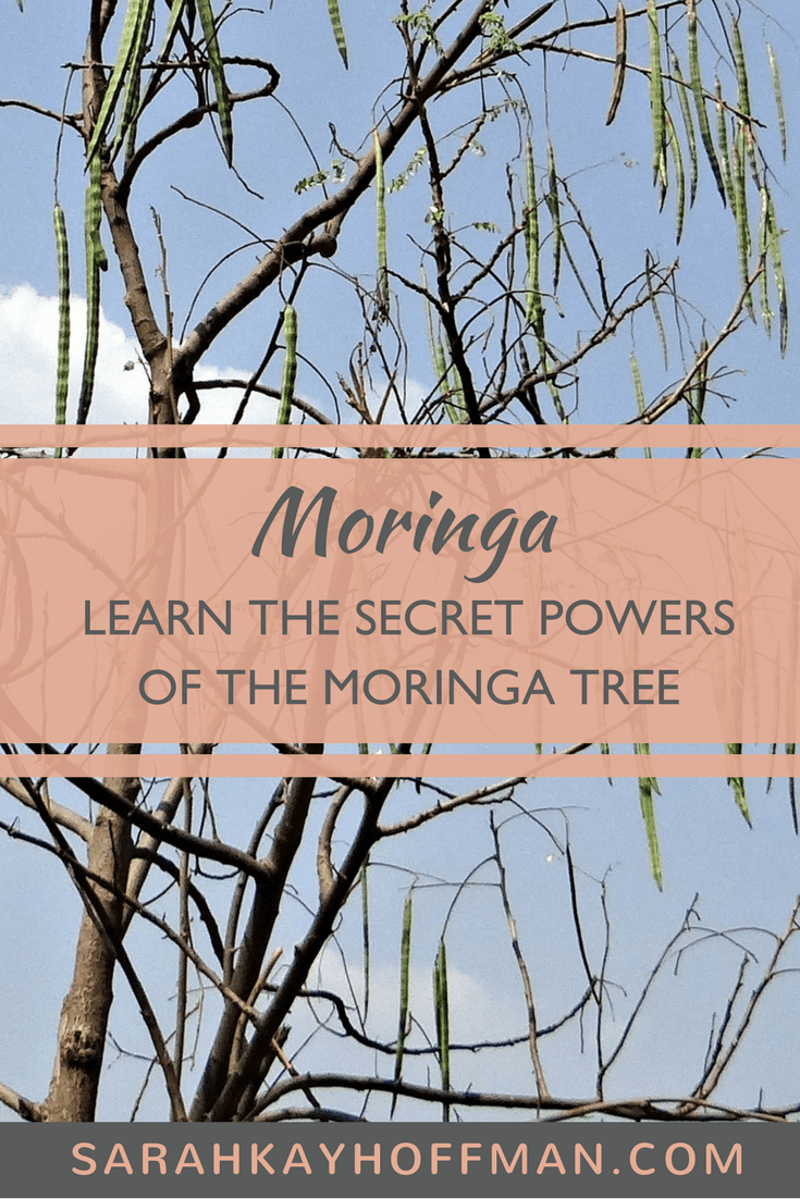 Moringa www.sarahkayhoffman.com gut healing wellness #healthyliving #guthealth #moringa #herb