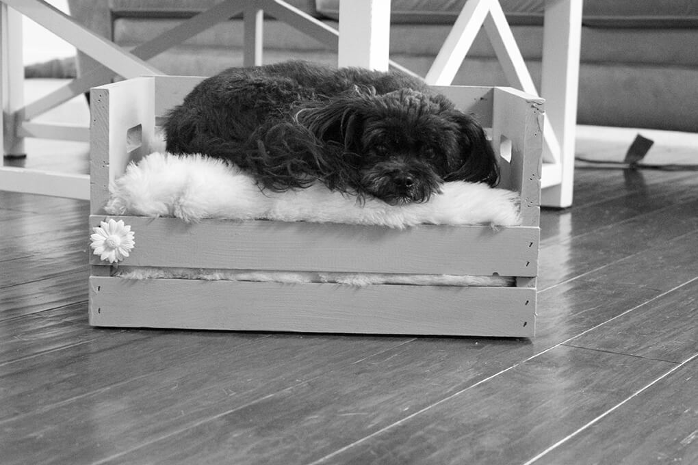 DIY Farmhouse Wooden Crate Bed for Puppy sarahkayhoffman.com BW Fiona