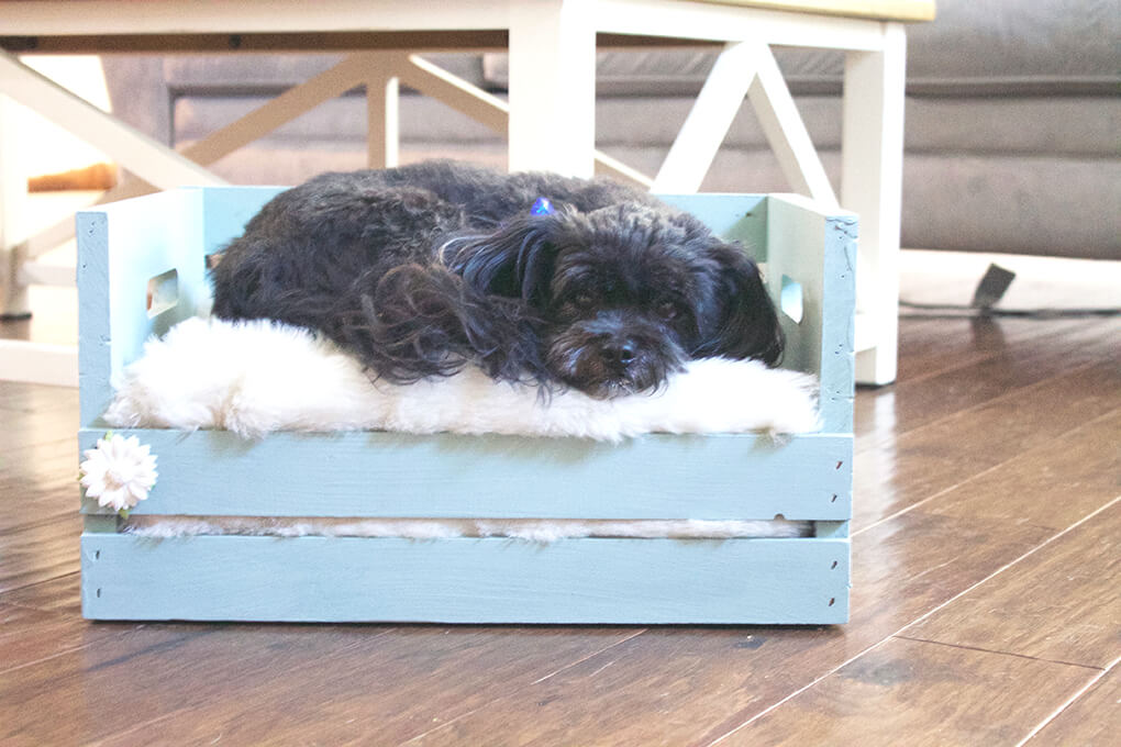 DIY Farmhouse Wooden Crate Bed for Puppy sarahkayhoffman.com Fiona laying in crate