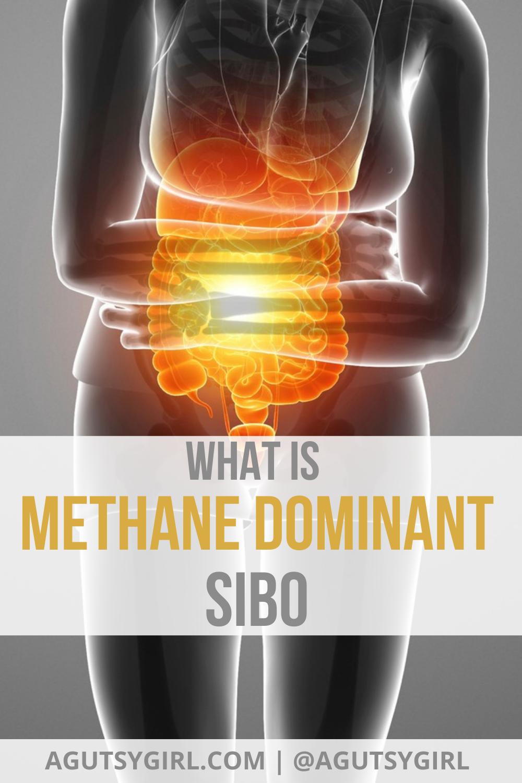 What is Methane Dominant SIBO agutsygirl.com #sibo #ibs #guthealth