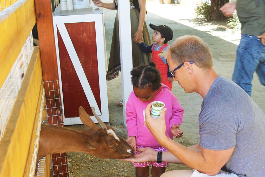 You Must Live Life sarahkayhoffman.com Lemons Farm Goat
