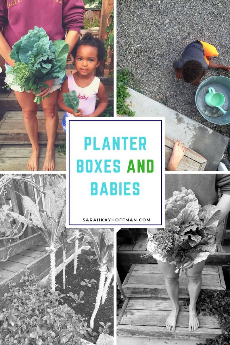 Planter Boxes and Babies sarahkayhoffman.com