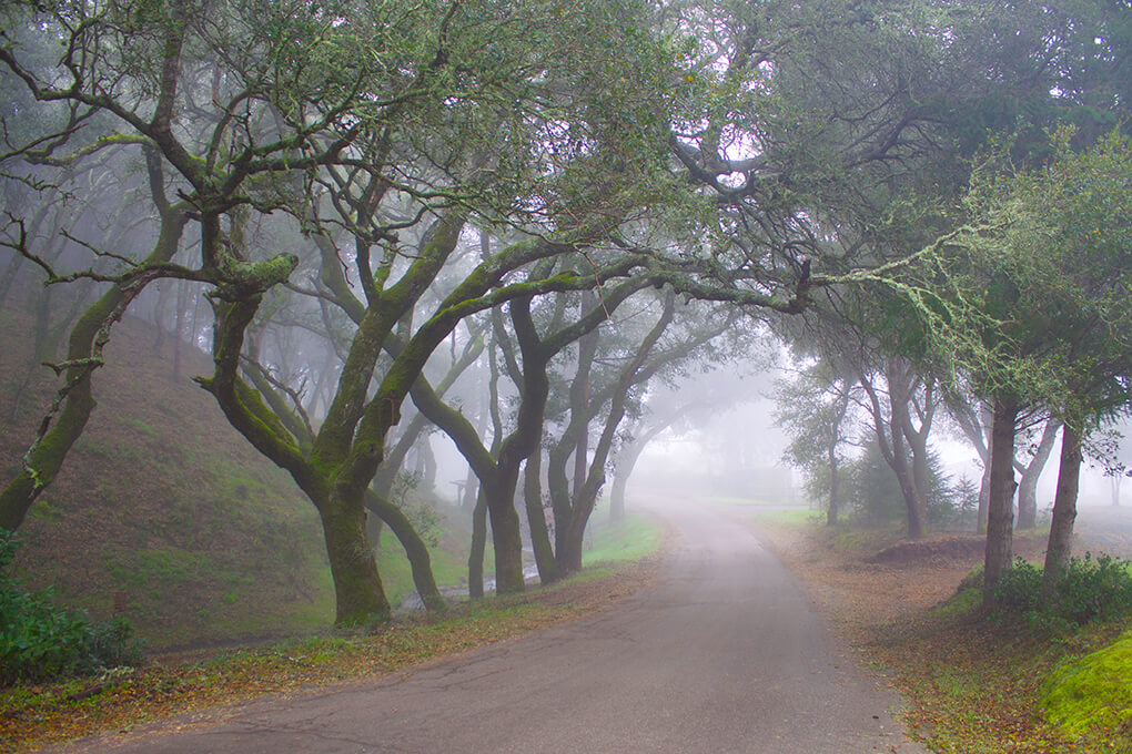 Mayacamas Ranch Retreat sarahkayhoffman.com Walk Explore
