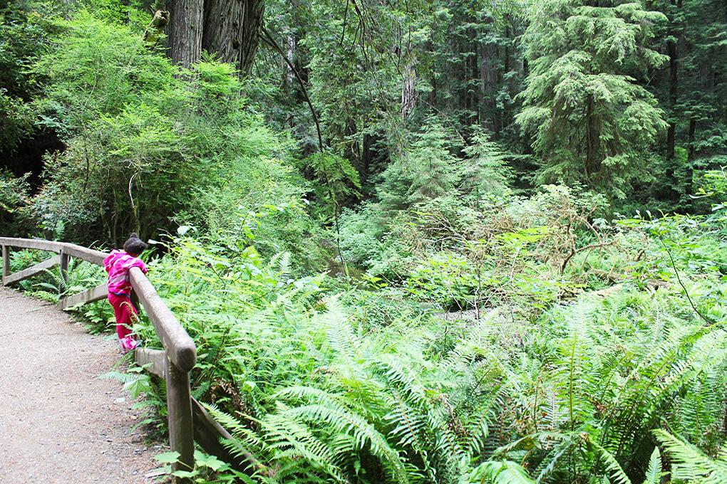 If a Tree Falls in a Forest sarahkayhoffman.com Samarah Redwoods