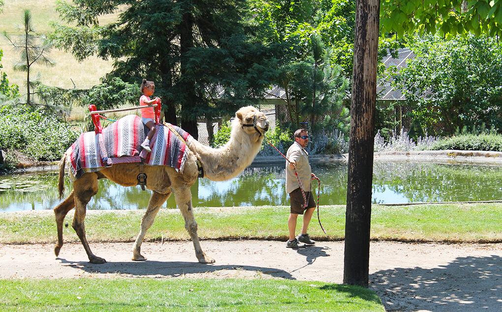 The Value of a Moment sarahkayhoffman.com Samarah Safari Oregon trip Camel