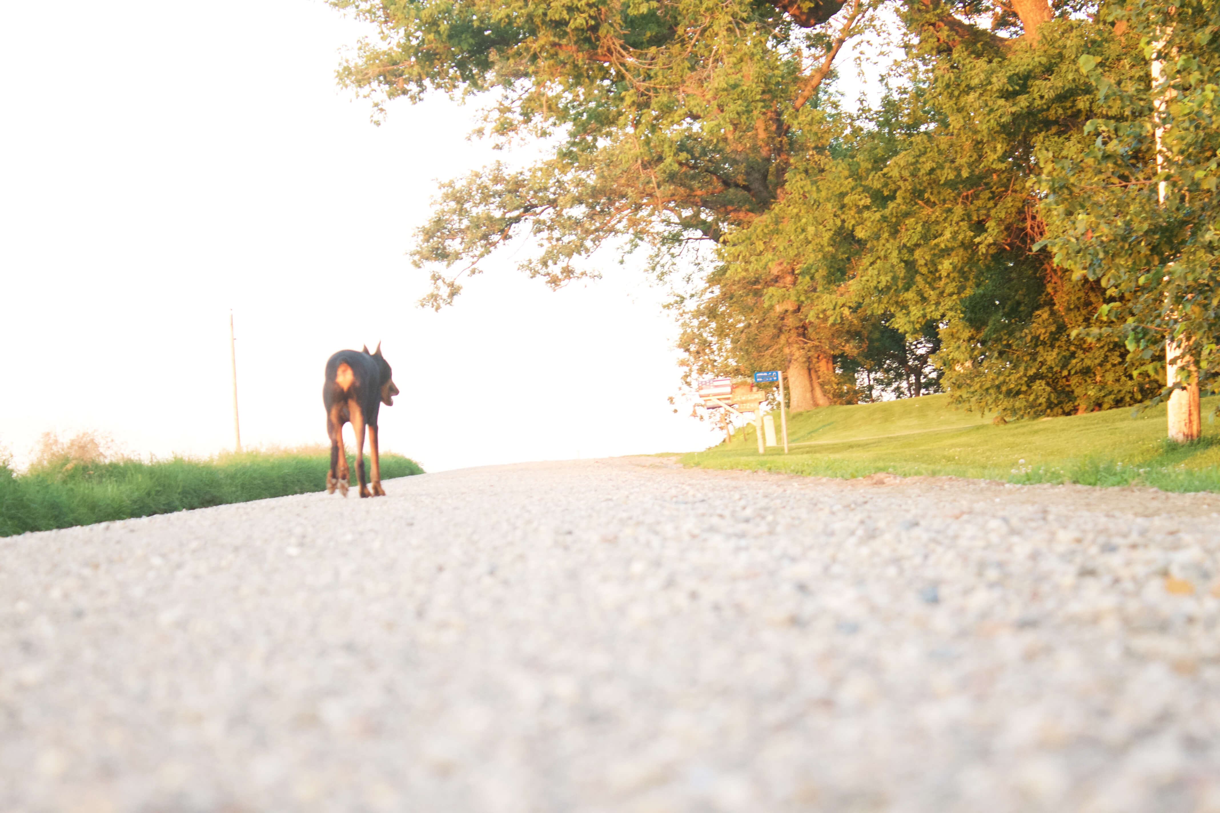 I am from Country Roads sarahkayhoffman.com Gravel Roads Java