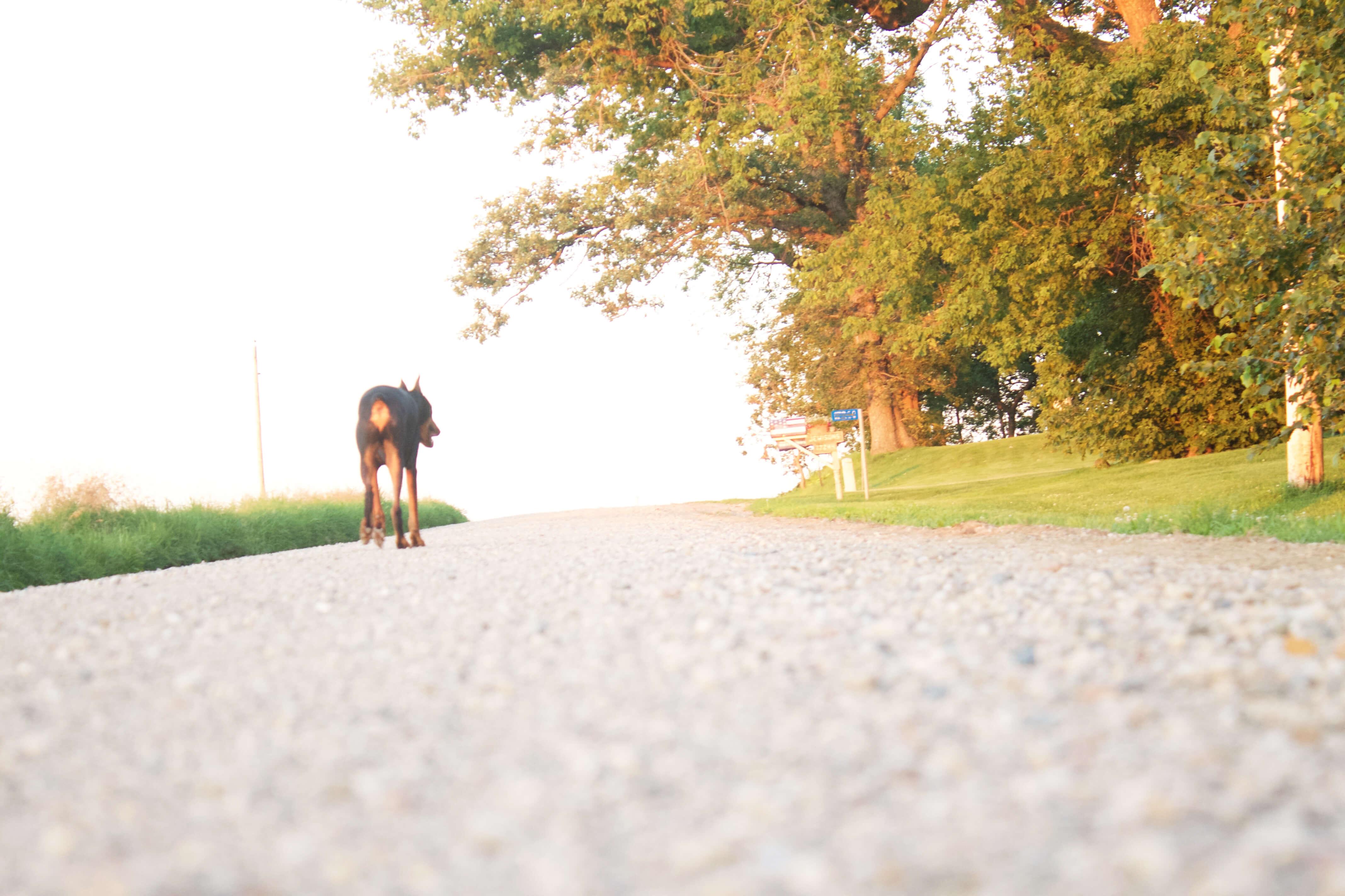 I am from Country Roads sarahkayhoffman.com Gravel Roads Java