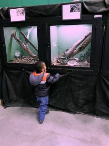 Two sarahkayhoffman.com Isaiah looking at snake