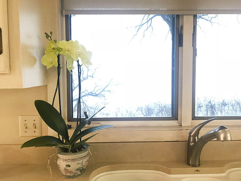 Yellow Orchid www.sarahkayhoffman.com #lifestyleblogger #orchid #flowers #healthyliving #homedecor