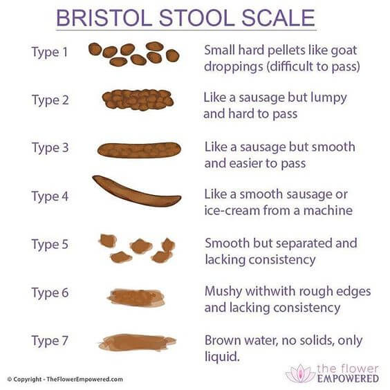 Bristol Stool Chart agutsygirl.com Flower Empowered #bristolstoolscale #ibs #guthealth #healthyliving