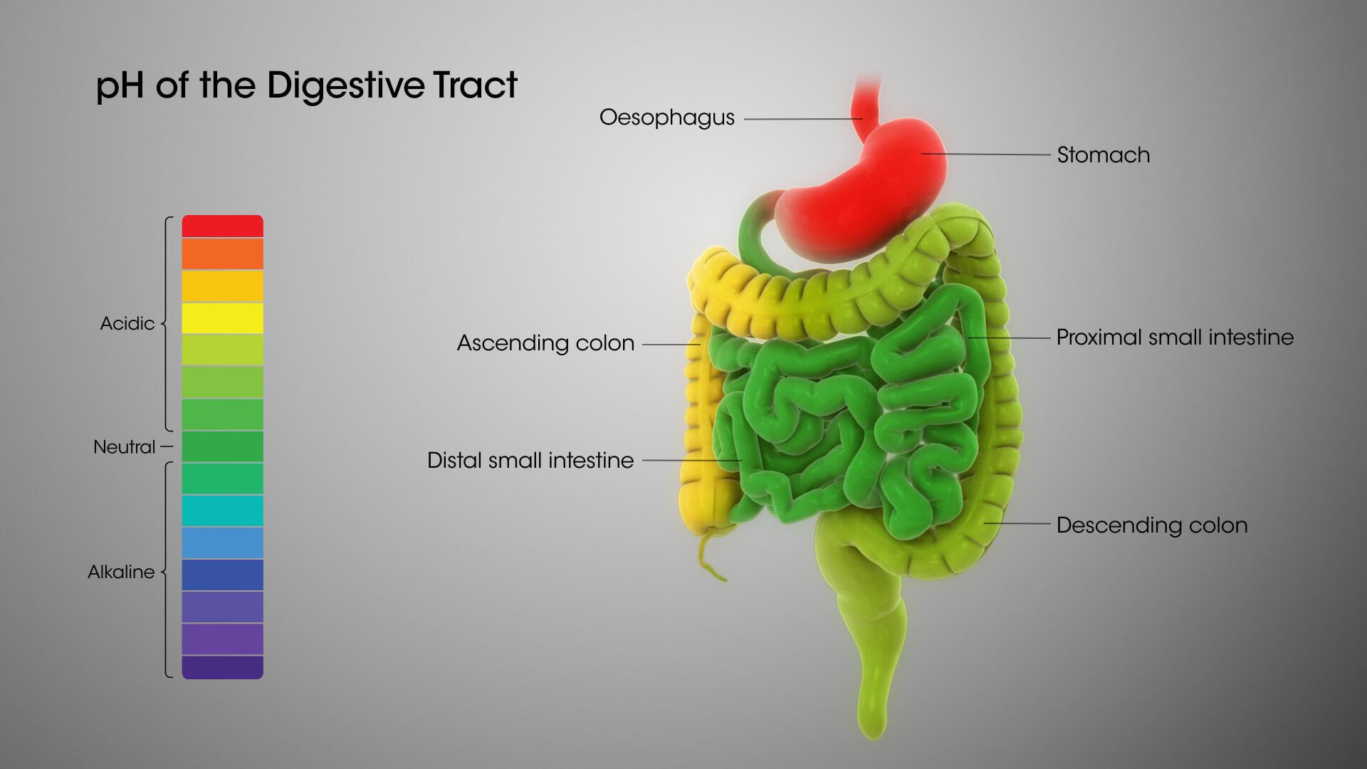 What is Achlorhydria agutsygirl.com Digestive System pH levels #digestivesystem #ph #guthealth #agutsygirl