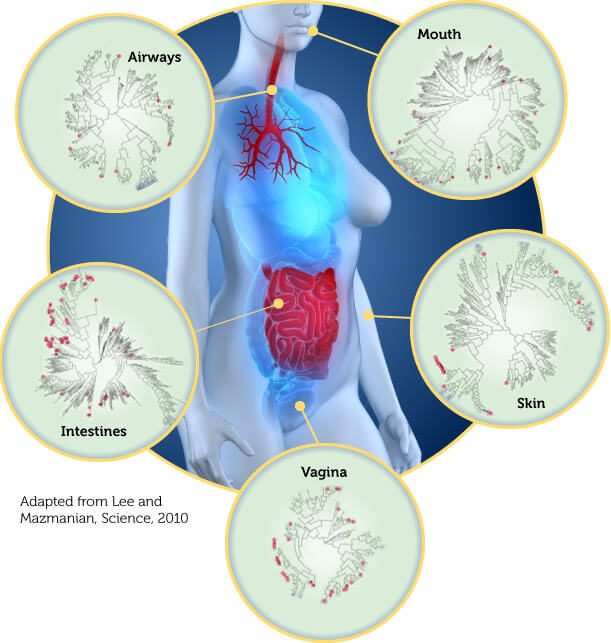Human Microbiome agutsygirl.com What is the Gut Microbiome #microbiome #guthealth #human 5 areas