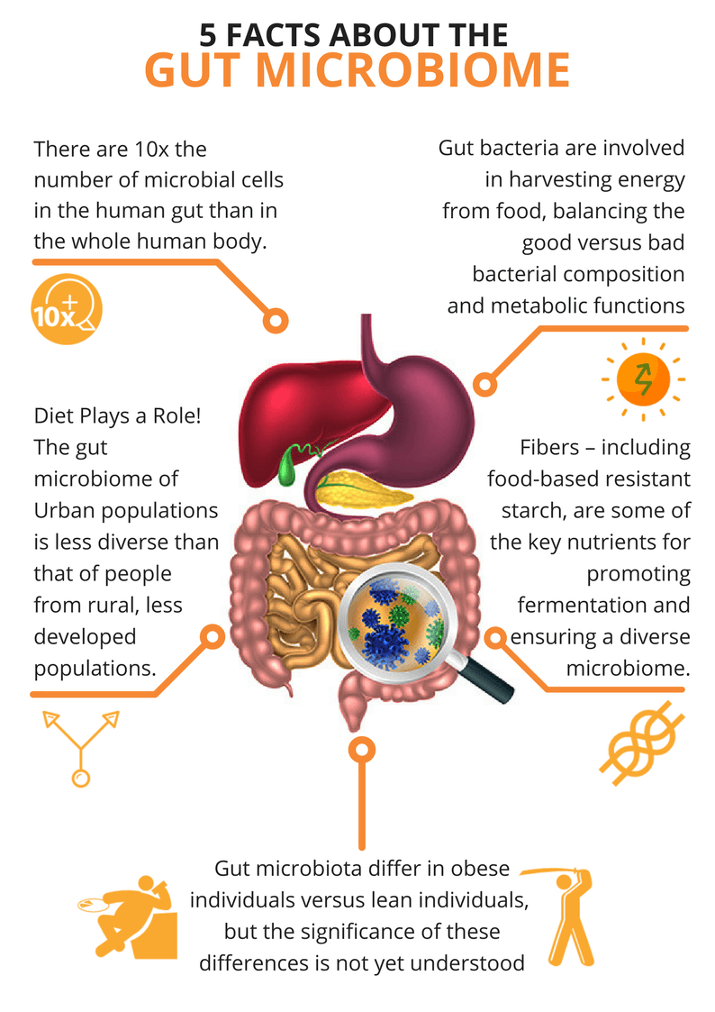 Human Microbiome agutsygirl.com What is the Gut Microbiome #microbiome #guthealth #human development