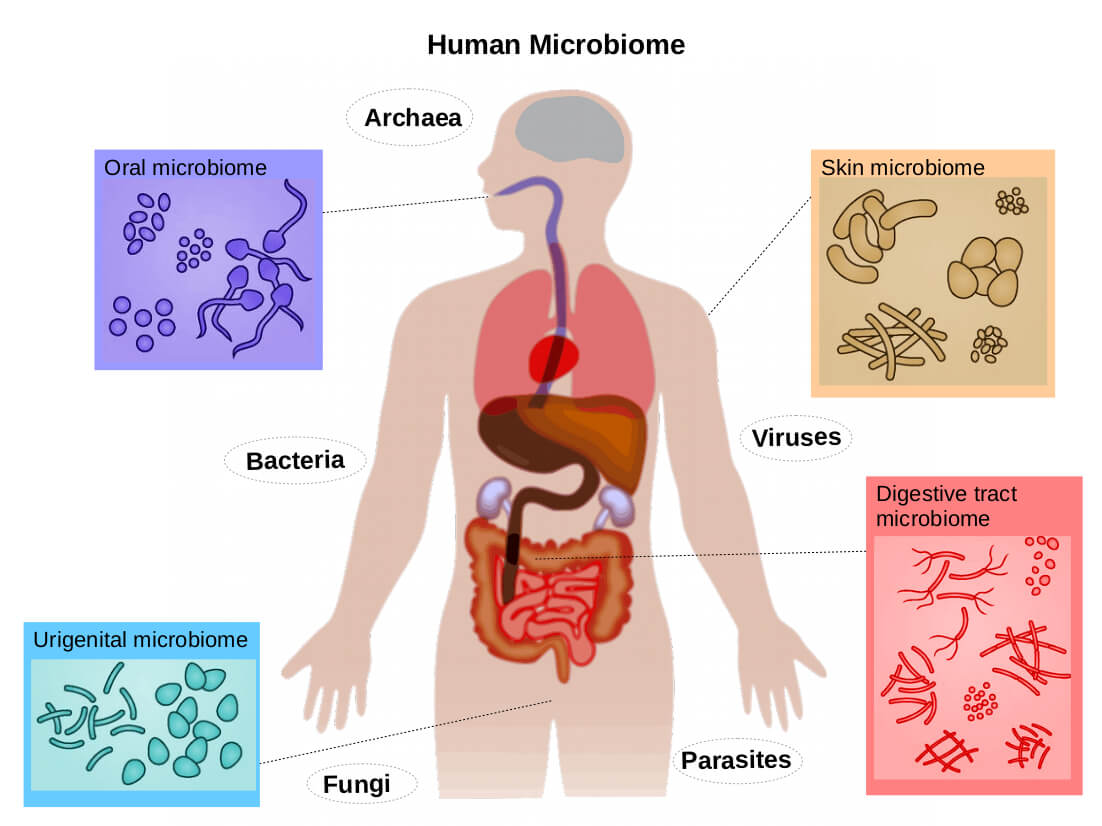 Human Microbiome agutsygirl.com What is the Gut Microbiome #microbiome #guthealth #human