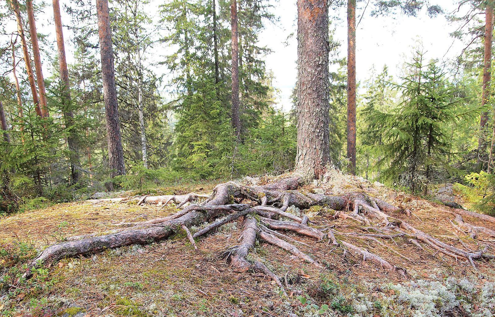 tree root GAPS agutsygirl.com