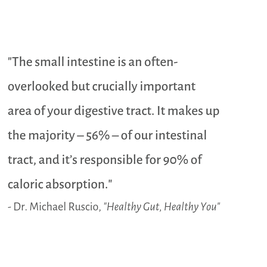 Small Intestine quote healthy gut healthy you importance agutsygirl.com #guthealth #sibo #healthyliving