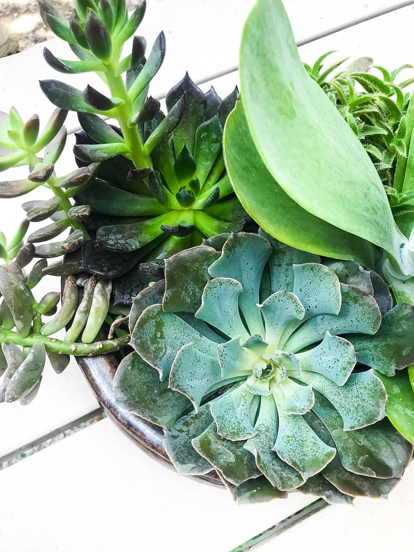 Self Care During Massive Grief agutsygirl.com #grief #selfcare #healthyliving #succulent