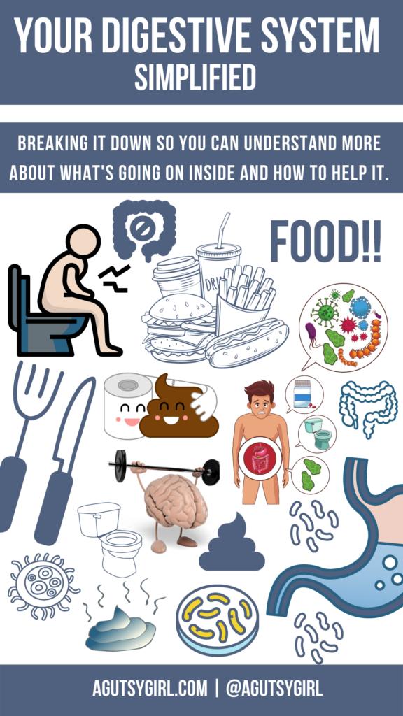 Your Digestive System simplified agutsygirl.com #digestion #guthealth #gi