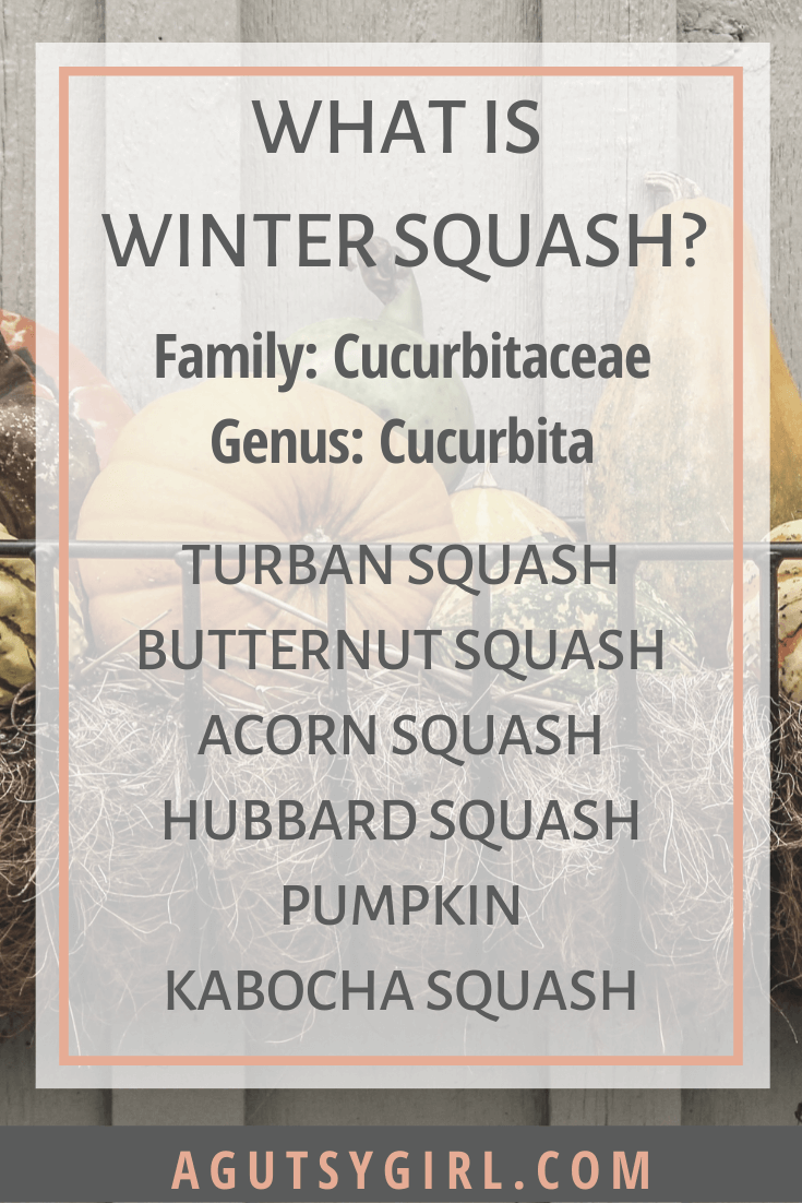 Wicked Winter Squash with IBS and IBD starchy foods agutsygirl.com #ibs #ibd #guthealth.png What is Winter Squash