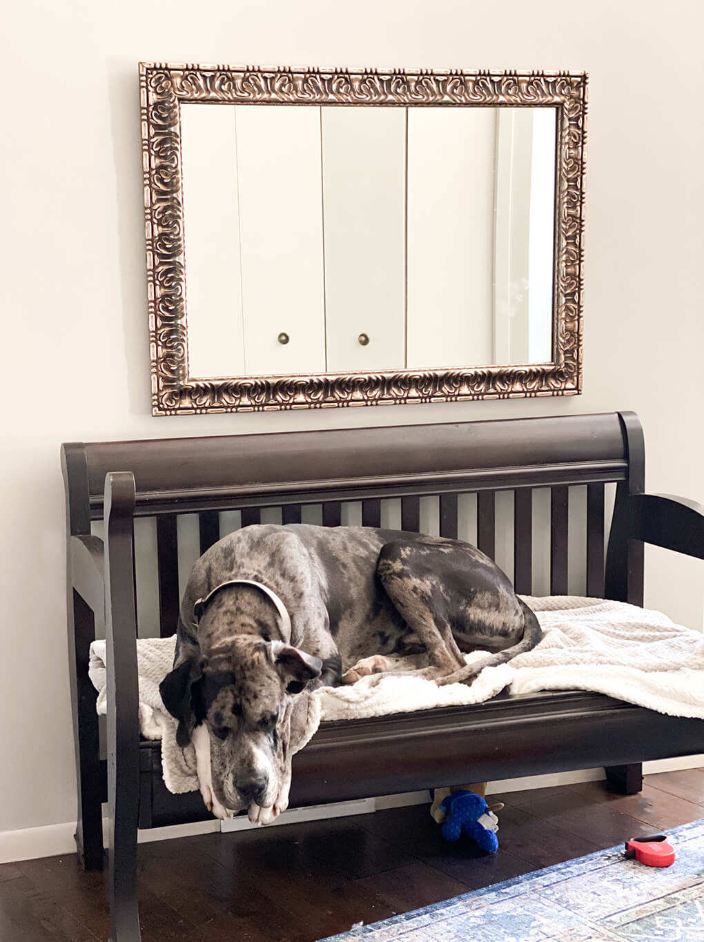 A Gutsy Girl's Favorites Issue 17 agutsygirl.com #healthyliving #greatdane #adoptdogs #fosteradopt Harley on dad's bench
