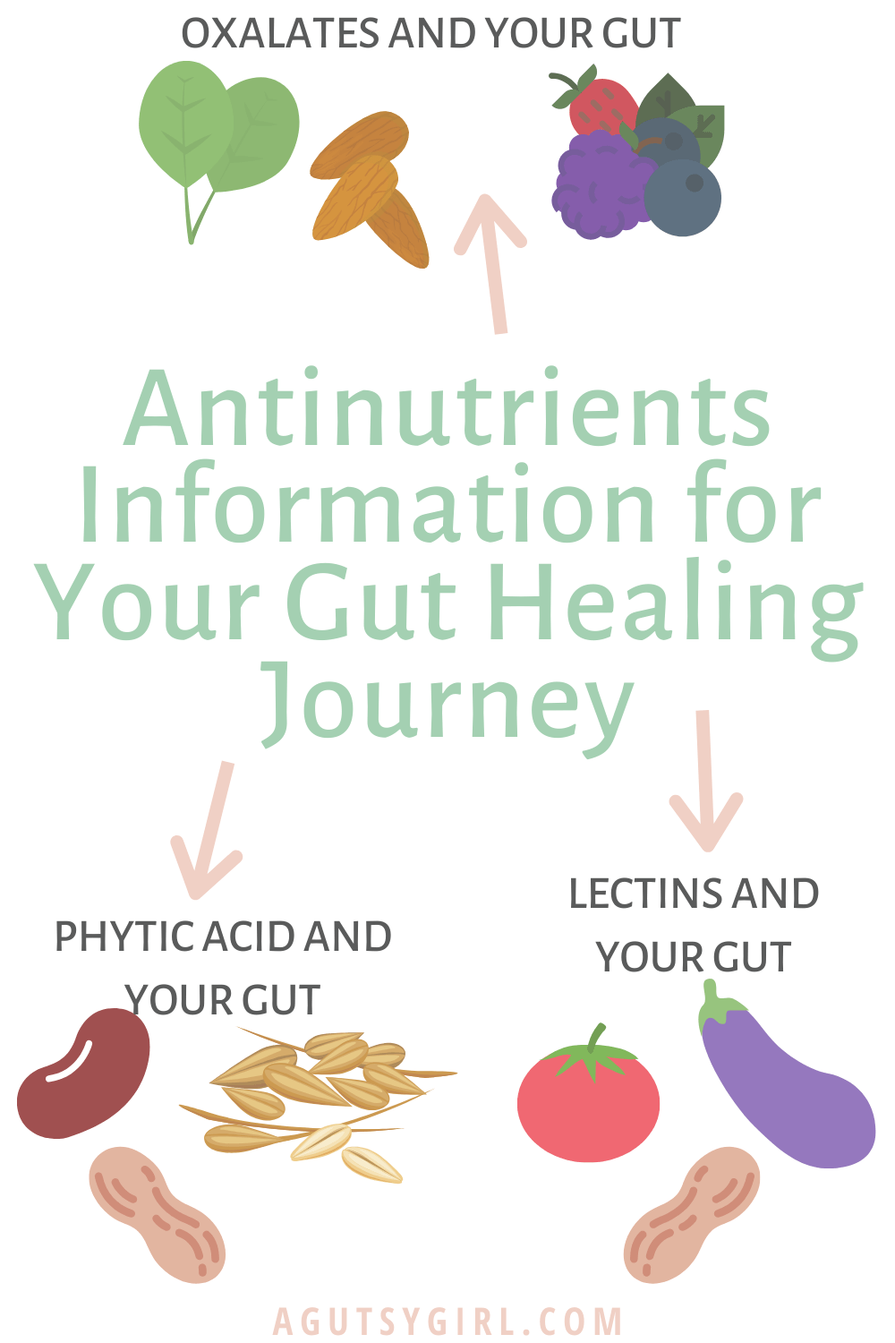 Antinutrients Information for Your Gut Healing Journey agutsygirl.com #nutrition #guthealth #healthyliving