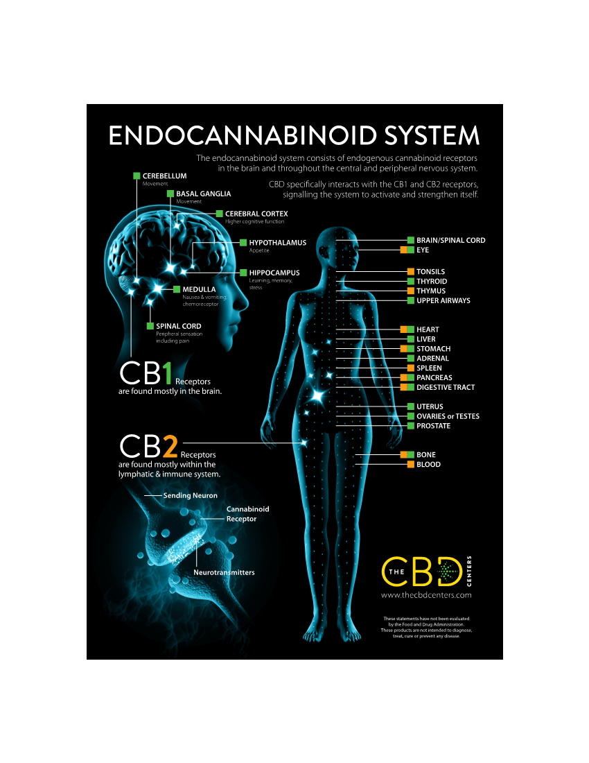 Endocannabinoid System and Your Gut agutsygirl.com #guthealth #Endocannabinoidsystem #healing