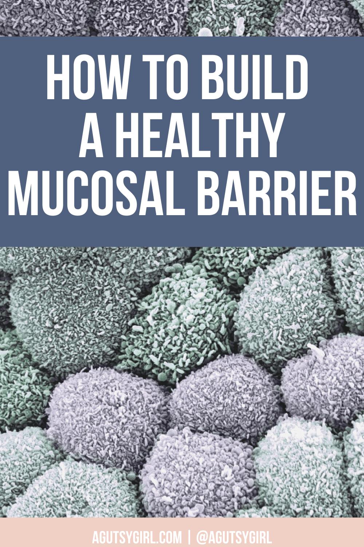 How to Build a Healthy Mucosal Barrier agutsygirl.com #mucosal #healthygut #guthealth