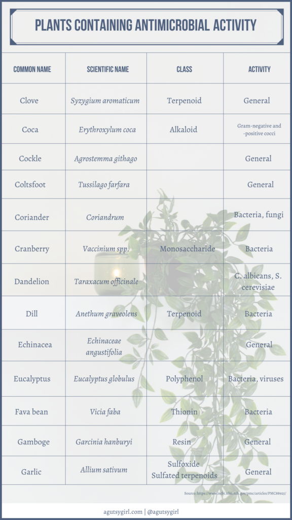 Plants containing antimicrobial activity agutsygirl.com NIH reference #plantpower #antimicrobial #guthealth