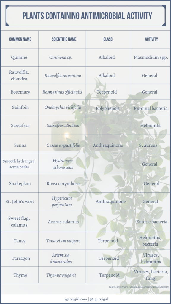 Plants containing antimicrobial activity agutsygirl.com NIH reference #plantsasmedicine #antimicrobial #guthealth